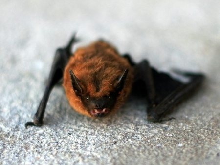 A bat. (Photo by Dasha Galan / Flickr used under creative commons license.)
